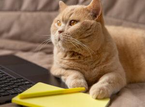 Coraz więcej osób szukających czegoś do pracy decyduje się właśnie naLenovo ThinkPad L14 Gen 2